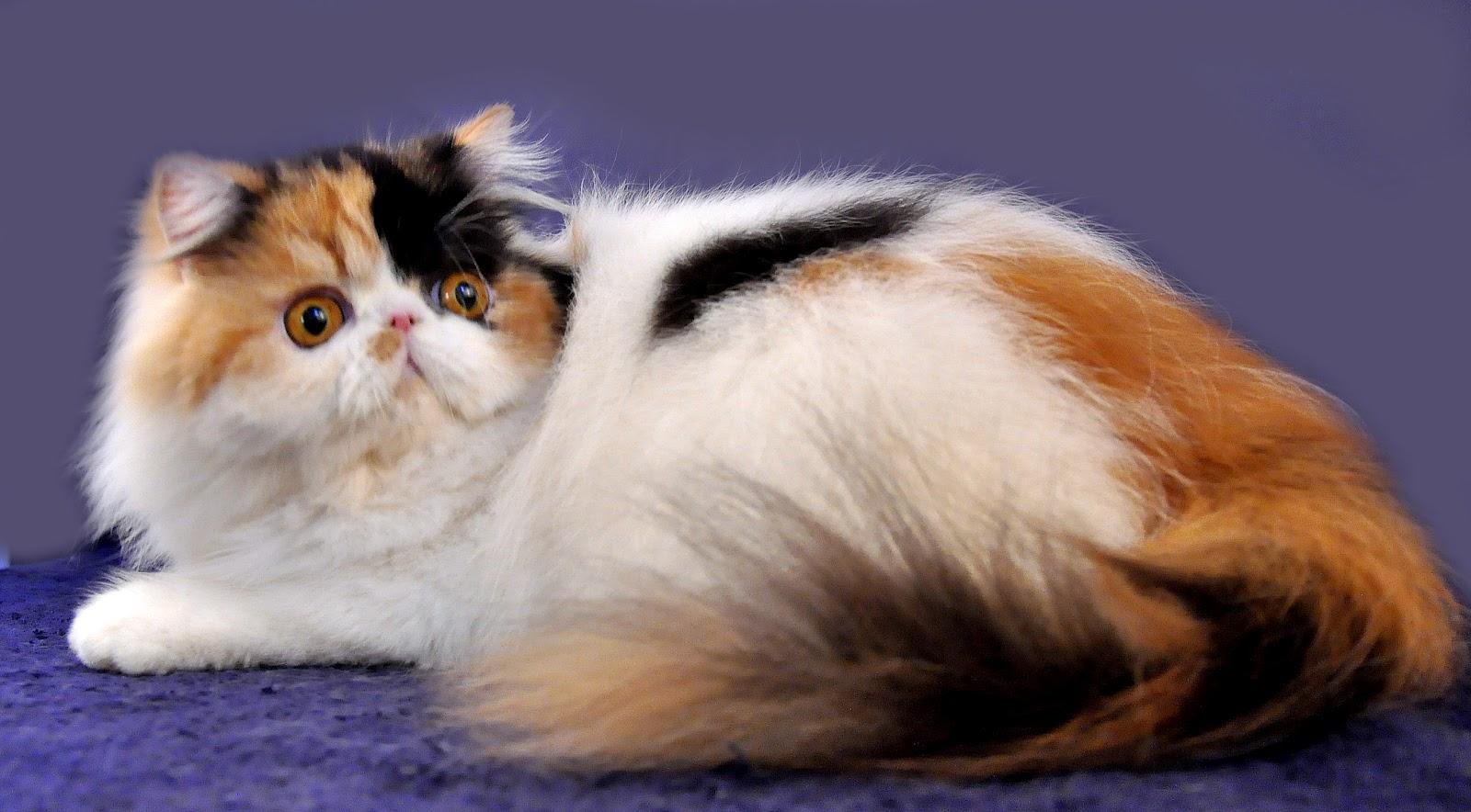 Artikel Kumis Kucing Catshop Laman 2